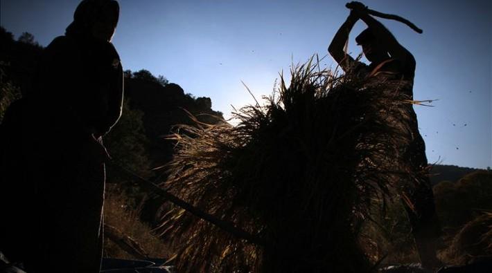 Tarımda büyümenin iki yüzü: Çiftçi küçülürken tarım büyüyor - Murat Büyükyılmaz